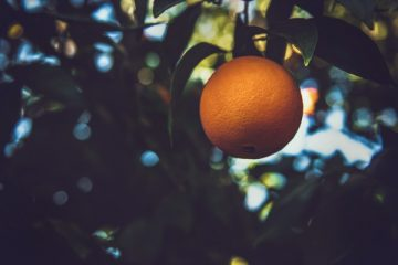 לגדל עץ תפוזים