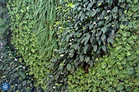 צולם במכון ויצמן למדע (קירות ירוקים – ריצ'ארד רוזנבאום)