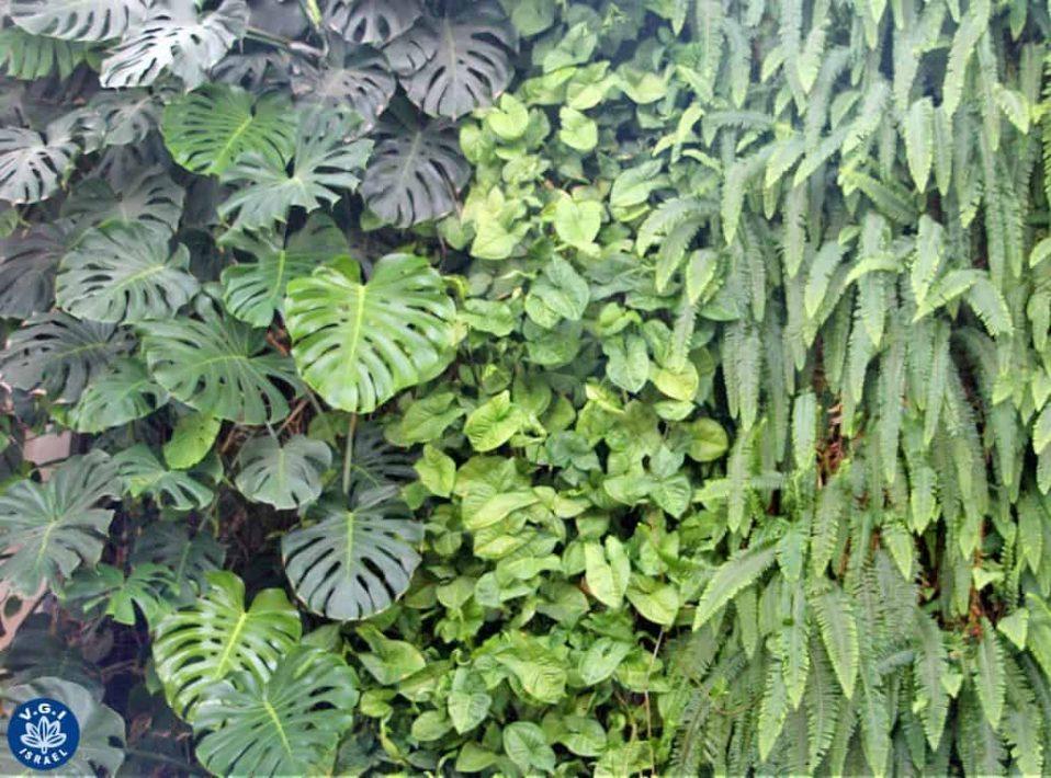 קיר ירוק אנכי, במכון ויצמן למדע הידרופוניקה