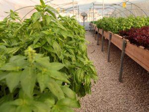 חברת ליבינגרין LIVINGREEN – חוות ירוק בעיר, דיזינגוף סנטר, תל-אביב