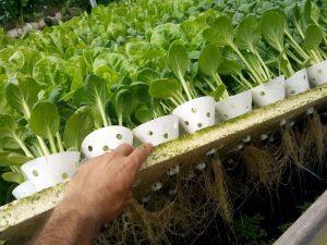 חברת ליבינגרין LIVINGREEN – חוות-ירוק בכפר, קיבוץ חוקוק