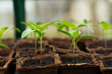 seedling-5009286_1280