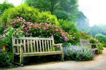 ספסל בגינה פרחונית